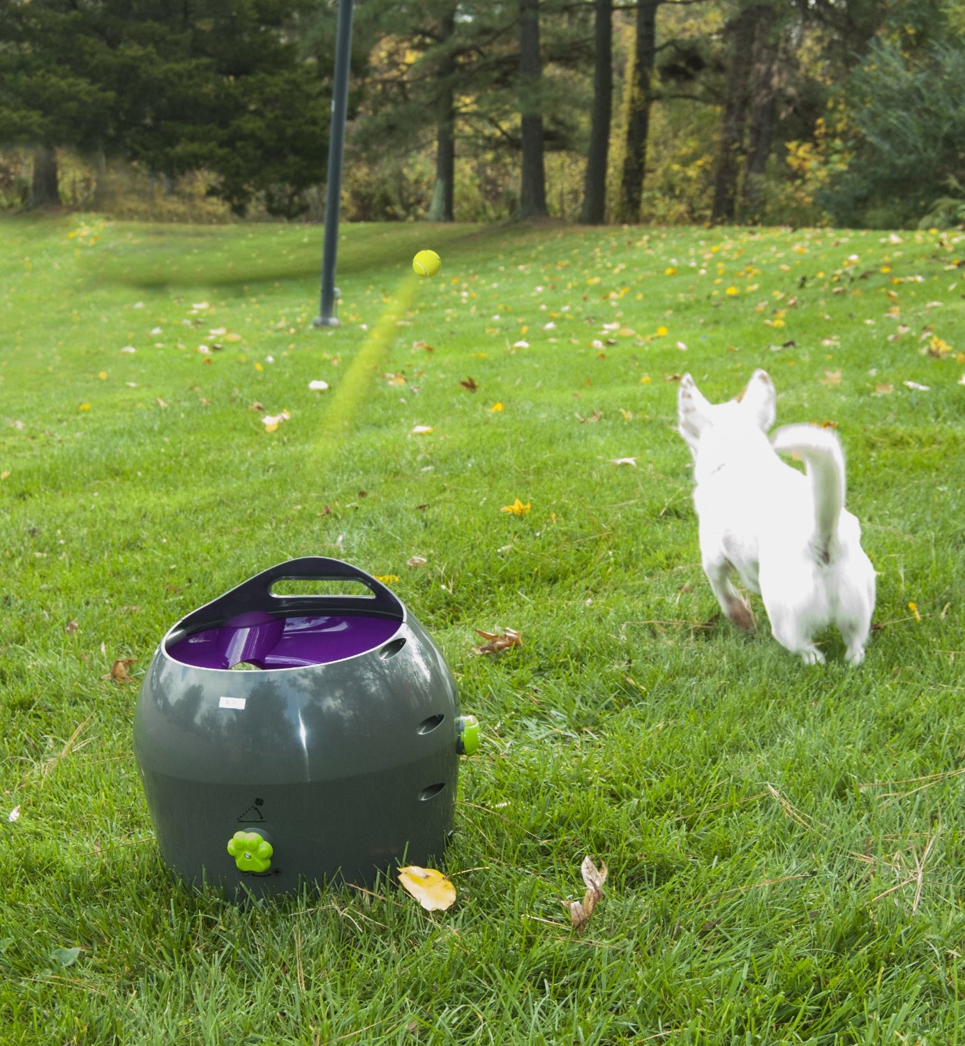 pet safe automatic ball launcher